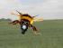 winter_wheat-bumble-bee-gas-mask-IMG_2297