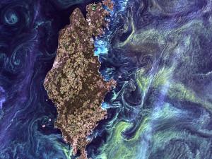 algae bloom baltic sea Van Gogh island
