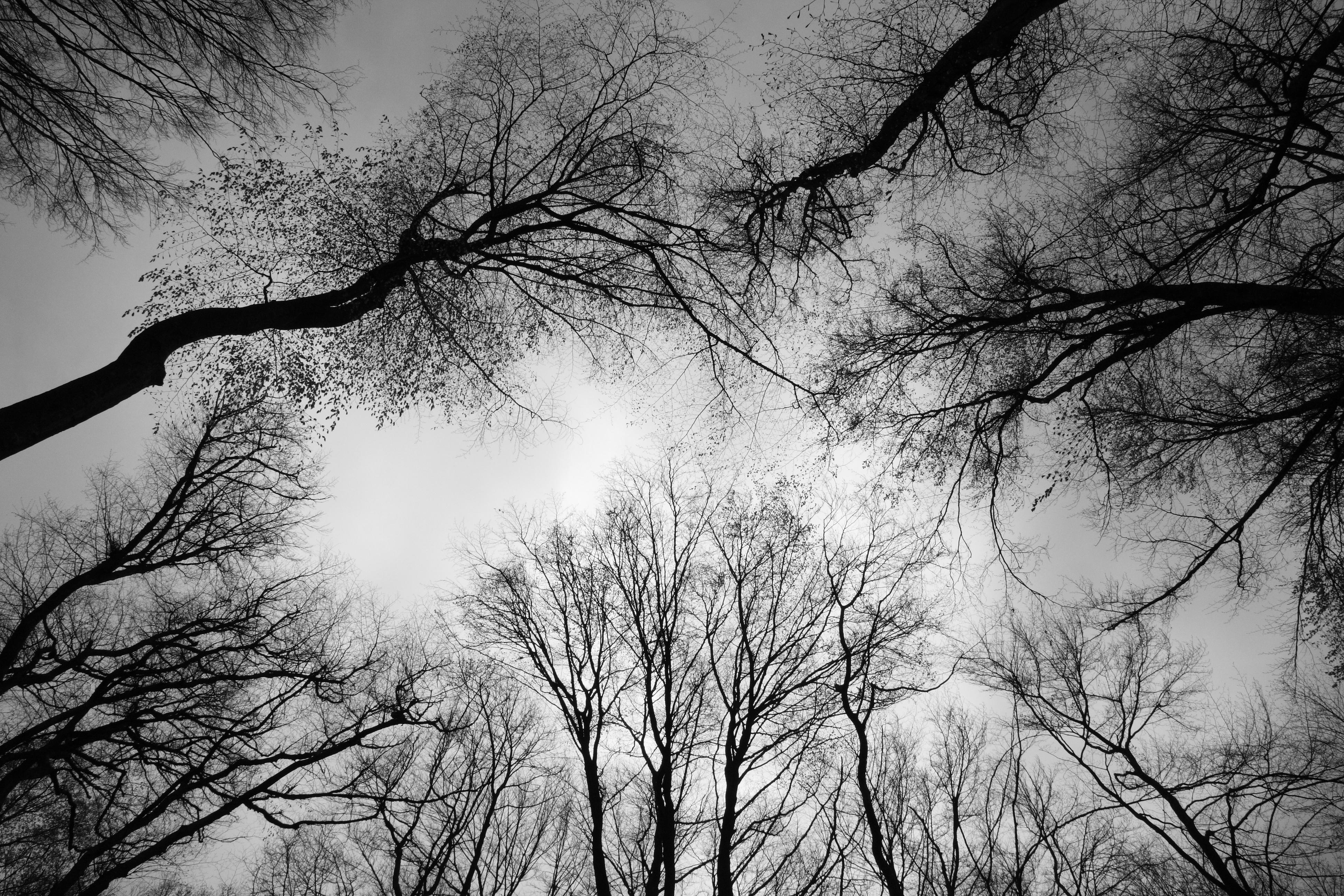 Breite_Ancient_Oak_Tree_Reserve,_Sighisoara,_Romania_(5681833966)