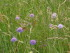 Vincent Ruin (Chambre d'Agriculture Savoie-Mont Blanc) photo. French competition for flowering meadows.