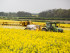 Oilseed rape fields are sprayed with neonicotinoids. (Photo: Chafer Machinery/flickr/cc)