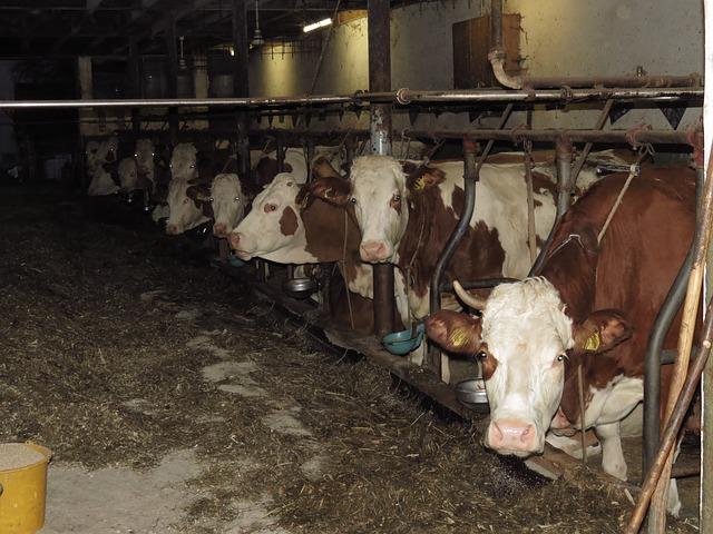 cows-80172_640