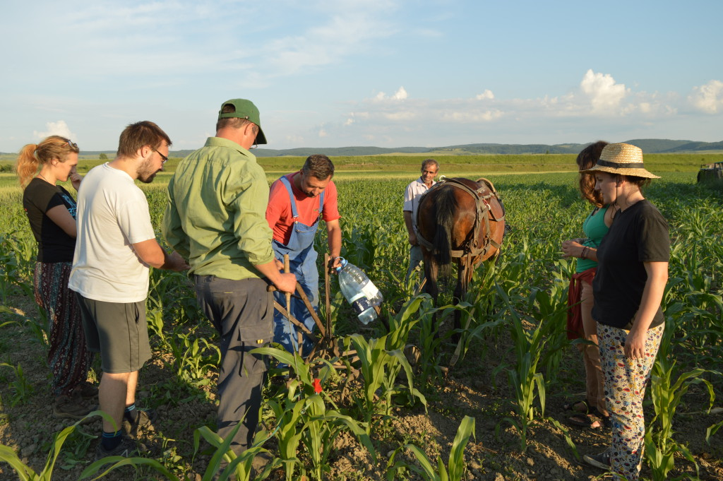 WWOOF Romania Host Farm - Ferma Topa