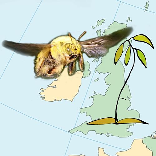 Bumblebee montage