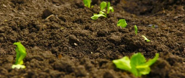 soil green-973596_960_720
