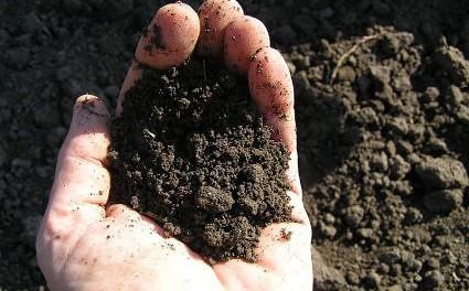 soil silt