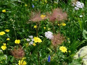 flower-meadow-181684_960_720