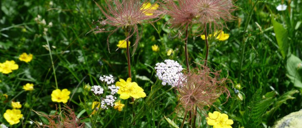 flower-meadow-181684_960_720