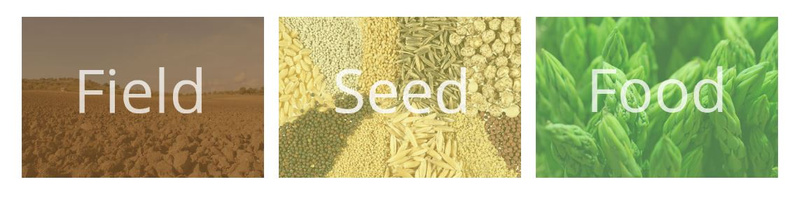 field seed and food