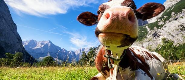 Karwendel Mountains (Austria) by FooTToo istockphoto.com/