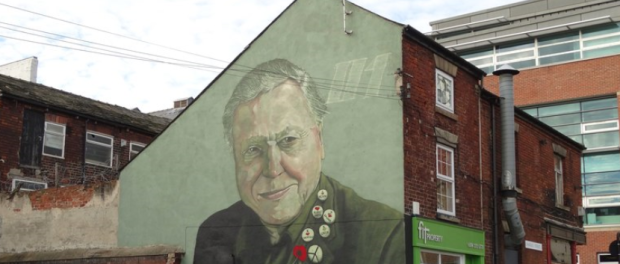 David Attenborough mural on Charles Street, Sheffield.