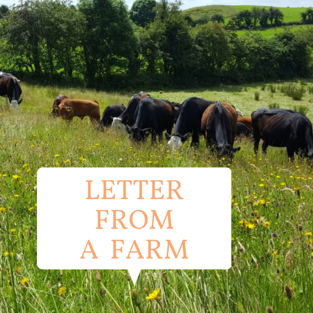 letter from a farm widget