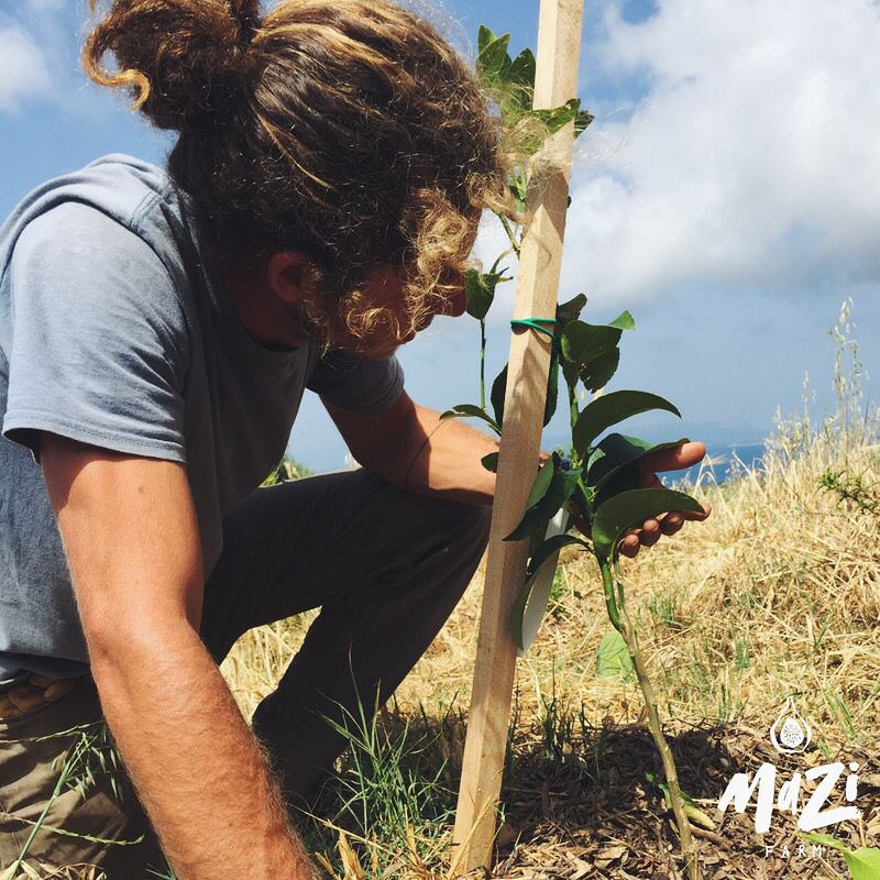 Greece's Mazi Farm | Letter from an Agroecological Farm