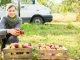 Organic apple farm in Poland