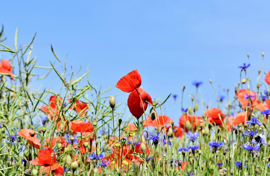 UK   Farmland Tax Breaks Revealed   ARC2020