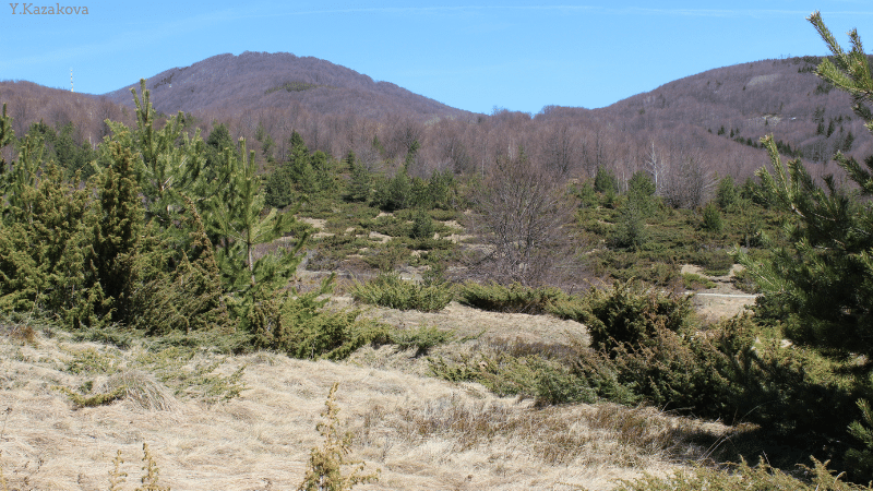 Abandoned pastures in Western Stara Planina, Bulgaria