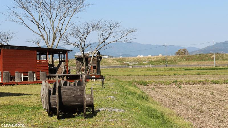 Paddy fields on the Torokko platform in Kyoto, Japan