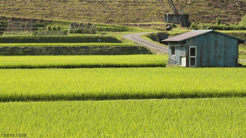Rural scene in Japan