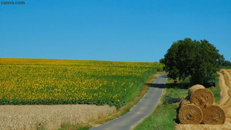 Rural scene in Germany