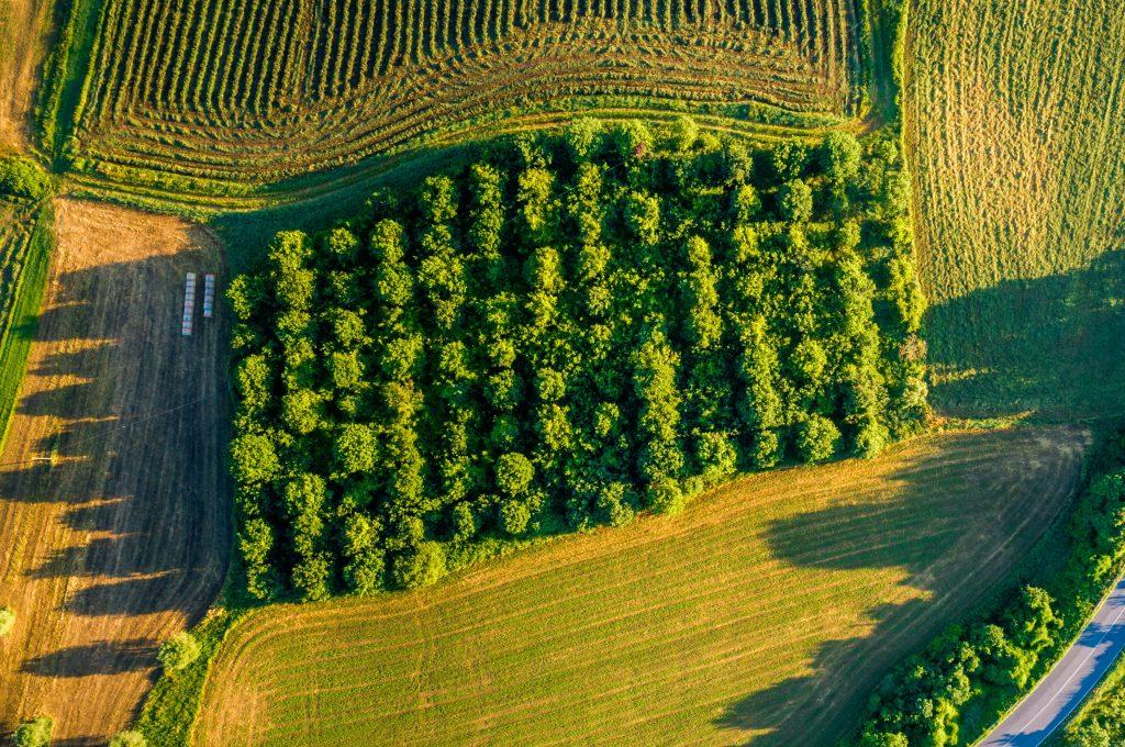 Field in Tuscany: unsplash.com